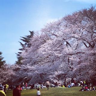 お花見砧公園