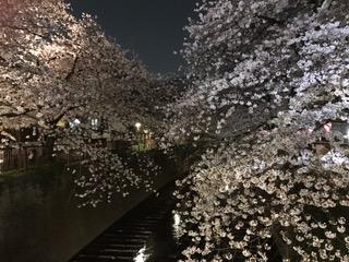 お花見目黒川
